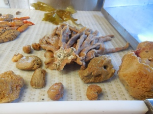 Various Porifera (Sponges) from a Bottom Trawl