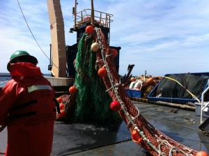 Bringing in the Aleutian Wing Trawling (AWT) Net