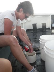 Rinsing the plankton