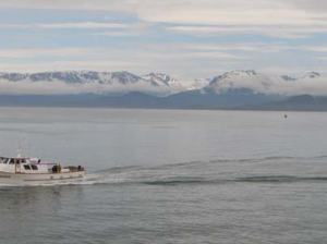 Back in beautiful Homer, AK, boats are  constantly coming and going