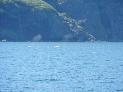 Two whales play in the Korovin Bay, just off the stern of the FAIRWEATHER.  What a treat!