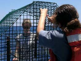 Stacey Harter and Marta Ribera, NOAA scientists, prepare one of two fish traps on board for deployment.