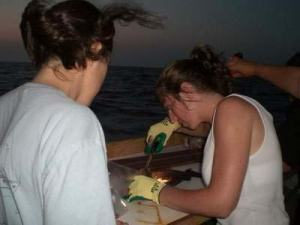 Stacey Harter removes the ear bone from a grouper as darkness sets in.  The ear bone is similar to a tree ring and reveals age and growth rate of the fish.