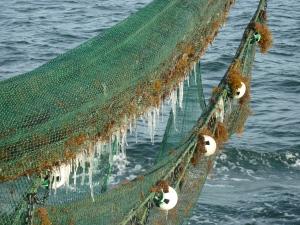 jelly nets