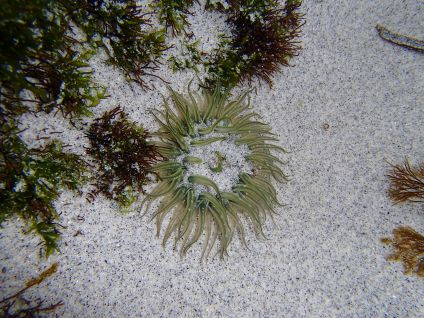 Cool anemome I found!