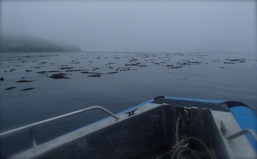 Navigating through Bull Kelp bed