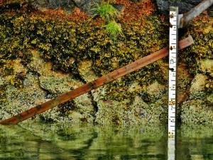 Measuring tidal changes