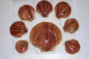 Not all scallop shells are pretty, but these were outstanding!