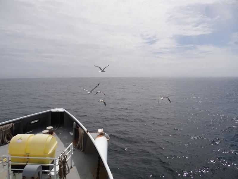 Sea Gulls Enjoying the Beautiful Day