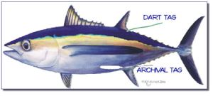 Tuna with Tag Locations