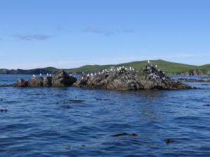 Seagulls perched on a rock in Porpoise Harbor