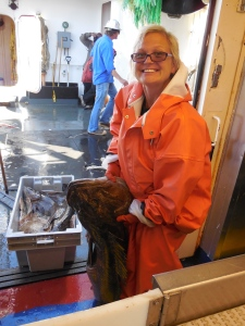 Large Lingcod Caught in Bottom Trawl