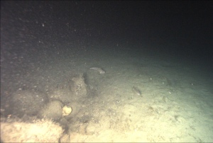 Fish and rocks on the seafloor.