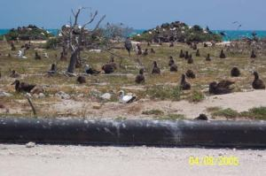 Seabirds on Tern Island
