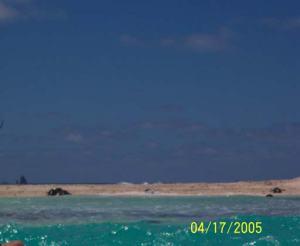Sea turtles on the beach