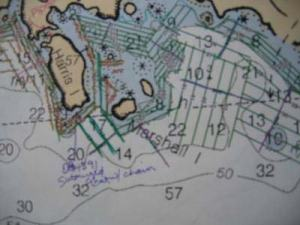 Survey transects