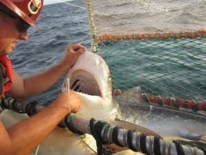 How can you not be happy when you're staring into the jaws of a Tiger Shark (132 lbs).