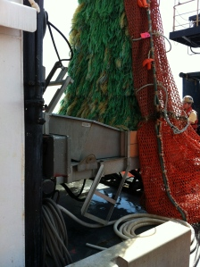 Delivering Fish From Trawling Net to Table