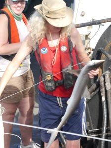 NOAA scientist and Field Party Chief for the second leg of Longline Lisa Jones handles an Atlantic Sharpnose on the first haul of the night shift.