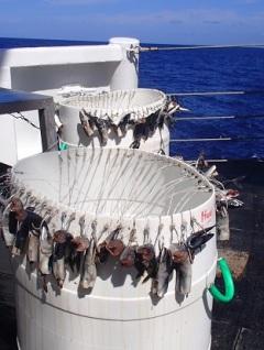 baited gangions