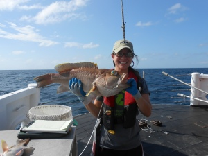 Yellowedge Grouper