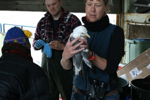 Sophia Webb holding Red-legged Kittiwake