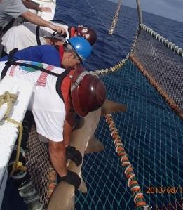 Tagging a Nurse Shark