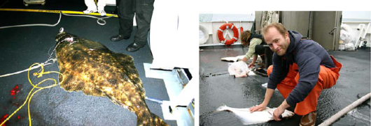 Josh's fish and a second photo of Dan Boles cleaning a halibut