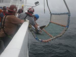 Shark Fin Clip