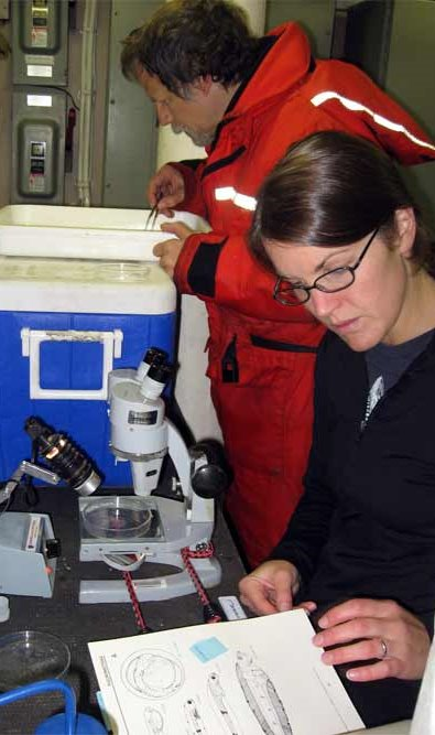Ron and Elizabeth are working together in identifying these juvenile fish; it is not an east task.