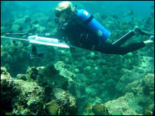 A diver armed with a camera is towed from a boat, obtaining many pictures that will be used to groundtruth mapping data.
