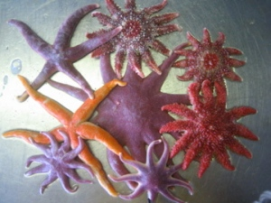 Colorful sea stars!