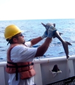 Chris Monsour examining a shark