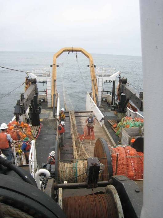 However, today we didn't find hake.  Instead, we found a Humboldt squid, several small fish, and some shrimp.