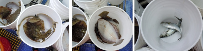 Species in specific buckets