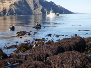 Divers install the tide gauge, and spent most of the day in the cold Alaska waters.  Good thing they were wearing dive suits!  Photo by Barry Jackson