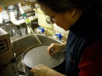 Betsy  picking arrow worms out of the sieve  for processing from the bottom soil samples.