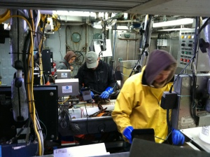 pic of fish lab