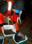 Night Oceanographer  J. R   giving the bottom soil sample iit's fist wash in to a bin to extract the organisms..