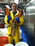 pic of lobster