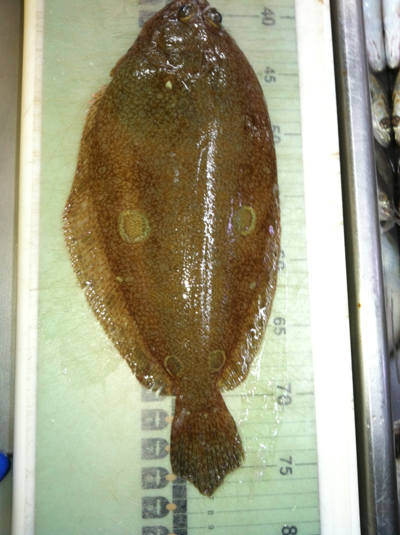 pic of four spot flounder