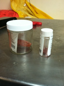 pic of preserving specimens