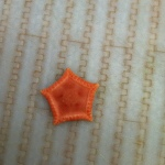 pic of sea star