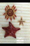 pic of sea stars