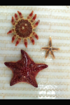 pic of sea stars