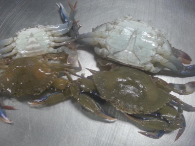 Lesser Blue Crab Female (right) Male (left)