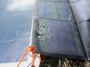 Bear chewed solar panels