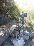 Dasher and Comet hiking Mount Wilson