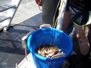 Weighing the catch
