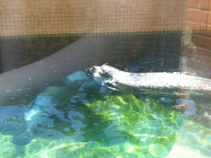 Seal at aquarium